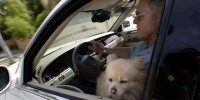 Cute and dangerous: Having pets in your lap while driving is a serious distraction.