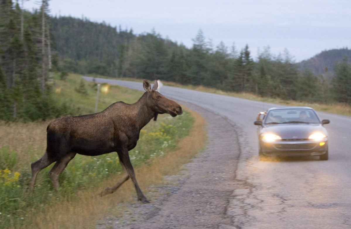 Animal collisions are on the rise, and they can be life-threatening to wildlife and humans.