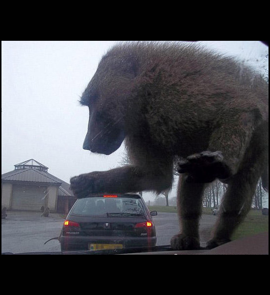Perhaps this is the poster for the next King Kong movie?